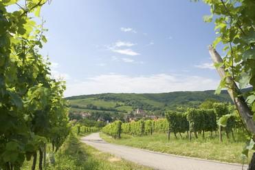De l'incontournable route des Vins d'Alsace au Haut-Koenigsbourg en passant par l'Ecomusée d'Alsace