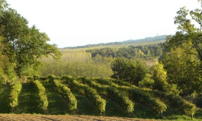 Terrasses de Rubens