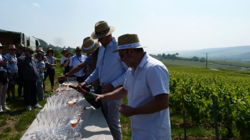 Apéritif dans les vignes au Champagne rosé