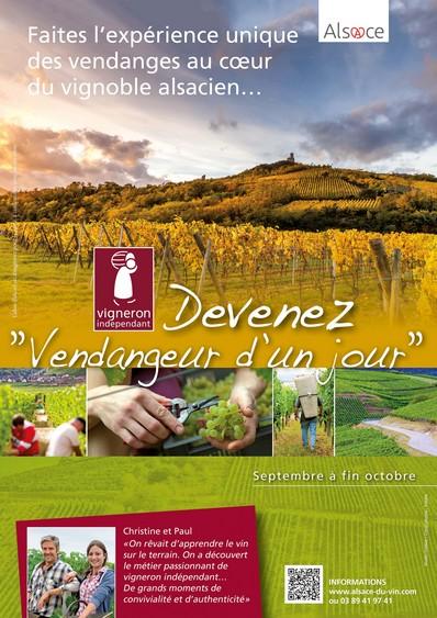 http://www.alsace-du-vin.com/ Vendangeur d'un jour
